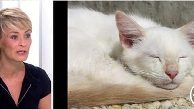 4 Vérités : la présidente de la SPA veut prévenir les abandons d'animaux pendant l'été
