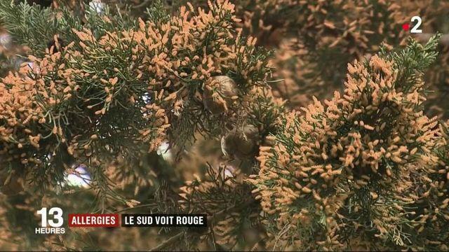 Allergies : le sud de la France voit rouge
