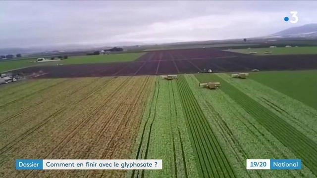Glyphosate : le débat qui empoisonne