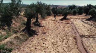 Une association de passionnés a décidé de préserver un héritage séculaire, et a même relancé la fabrication d'huile d'olive d'arbres parfois millénaires.  (CAPTURE D'ÉCRAN FRANCE 3)