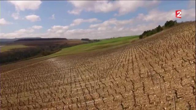 Dijon : la ville veut faire renaître son patrimoine viticole oublié