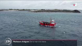 Les algues ont beaucoup de vertes et elles pourraient avoir un rôle dans la lutte contre le réchauffement climatique, découvrez le métier de pêcheur d'algues dans le Finistère. (FRANCE 2)