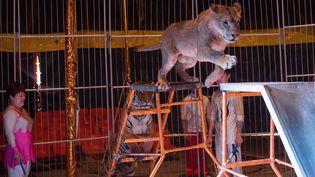 Un lion africain et un tigre sibérien dans un cirque en Chine (photo d'illustration). (NICOLAS ASFOURI / AFP)