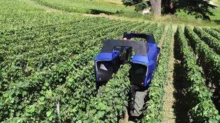 Ce robot électrique, sans pilote, a été présenté à une vingtaine de viticulteurs, dans le département du Var. (P. Vaireaux / France Télévisions)