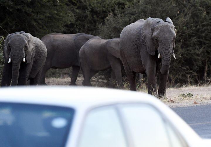 Des éléphants traversent une route près de Kasane au nord du Botswana. (MONIRUL BHUIYAN / AFP)