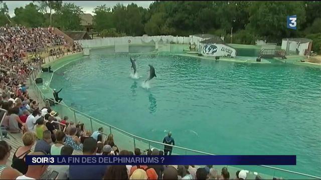 La fin des delphinariums ?