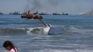 Une baleine s'est échouée sur une plage d'Iquique (Chili), le 28 décembre 2015. Elle a été secourue par des pêcheurs et des baigneurs. (APTN)