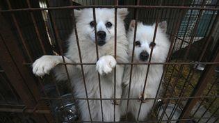 Des chiens dans un élevage de Hongseong (Corée du Sud), le 13 février 2019. (JUNG YEON-JE / AFP)