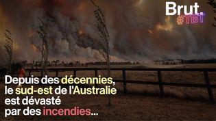 VIDEO. 1939, 1983, 2009… Depuis des décennies, le sud-est de l'Australie est dévasté par des incendies... (BRUT)