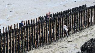 Des ostréiculteurs à Cancale (Ille-et-Vilaine), le 9 juillet 2013. (YANNICK LE GAL / ONLY FRANCE / AFP)