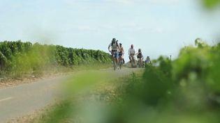 France 3 vous dait découvrir la cyclo-route des vins de la cote de Beaune. (France 3)