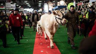 La vache Idéale, égérie de la 57e édition du Salon de l'agriculture, fait son entrée au parc des expositions de la Porte de Versailles à Paris, le 21 février 2020. (MARTIN BUREAU / AFP)