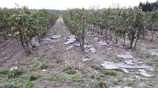 Des morceaux de goudron et divers déchets dans les vignes du domaine de Ventanac (Aude), après le déluge du 15 octobre 2018. (BENJAMIN MATHIEU / RADIO FRANCE)