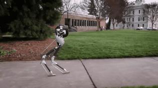 Cassie, un robot bipède qui pourrait remplacer les livreurs. (Oregon State University)