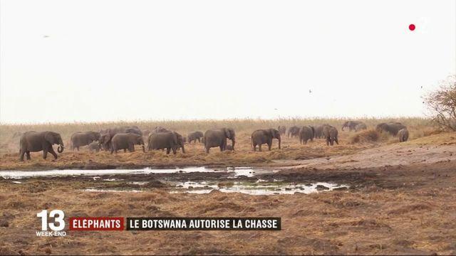 Environnement : le Botswana autorise la chasse aux éléphants