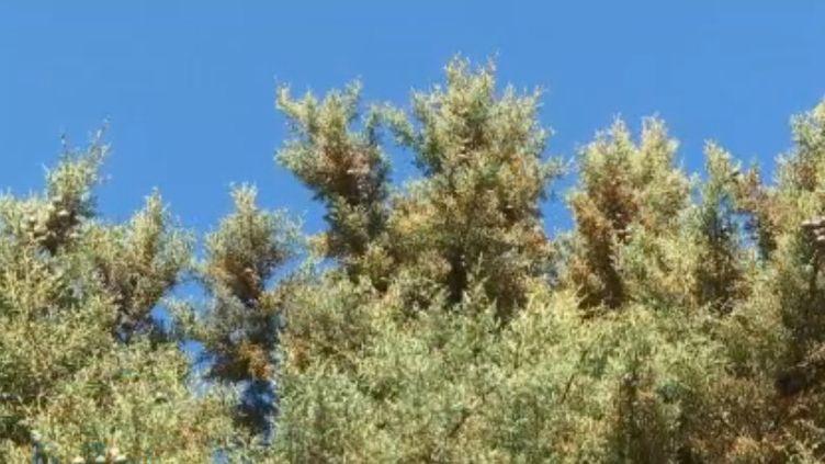 Avec les températures très douces de cet hiver, les allergies au pollen ont pris de l'avance. 14 départements sont placés en alerte rouge dans le nord-est et surtout autour de la Méditerranée. (FRANCE 3)