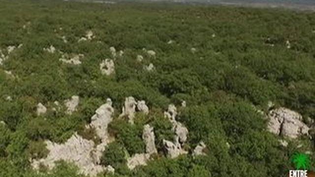 À la Découverte du bois de Païolive
