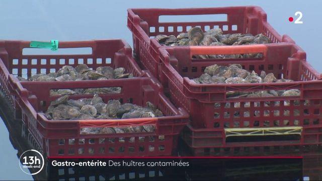 Gastro : le virus contamine les huîtres
