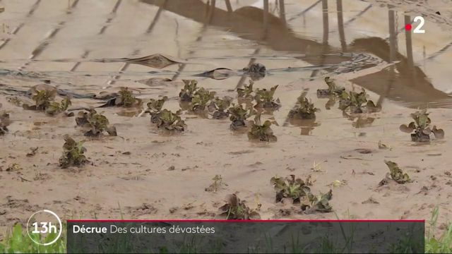 Inondations : des champs de légumes dévastés