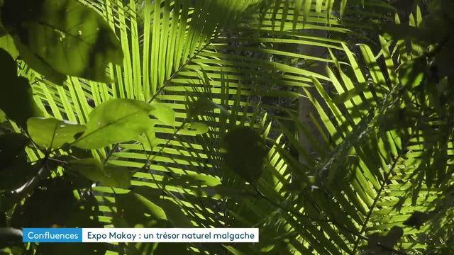 « Makay, refuge en terre malgache », une exposition immersive dans une région menacée