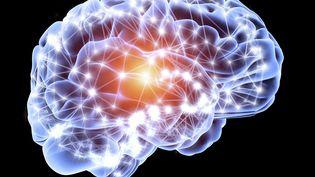 Notre cerveau contiendrait quelque 100 milliards de neurones. Un patrimoine précieux que l'on peut préserver de différentes manières. (APA / AFP)