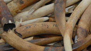De l'ivoire illégale, détruite à Paris, le 6 février 2014. (CITIZENSIDE / PATRICE PIERROT /  AFP)