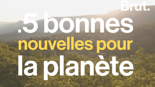 VIDEO - Cinq bonnes nouvelles pour la planète  (BRUT)