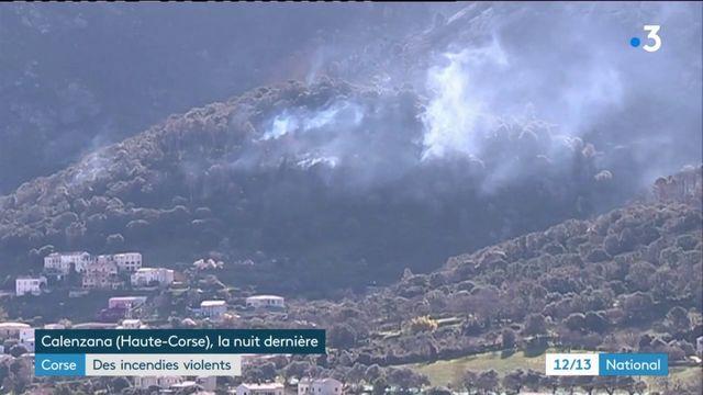 Corse : des incendies violents ravagent plus de 1 200 hectares