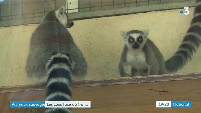 Trafic d'animaux sauvages : deux hommes interpellés et incarcérés