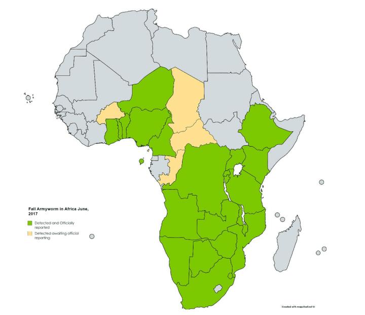 Carte de la FAO sur l'infestation de la chenille légionnaire d'automne. En vert, les zones officiellement infestées; en jaune, les régions où elle a été détectée mais en attente de rapports officiels. (Capture d'écran/FAO)