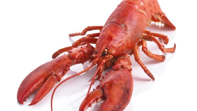 En Suisse,les homards ne pourront plus être plongés vivants dans l'eau bouillante. (SCIENCE PHOTO LIBRARY / R3F)
