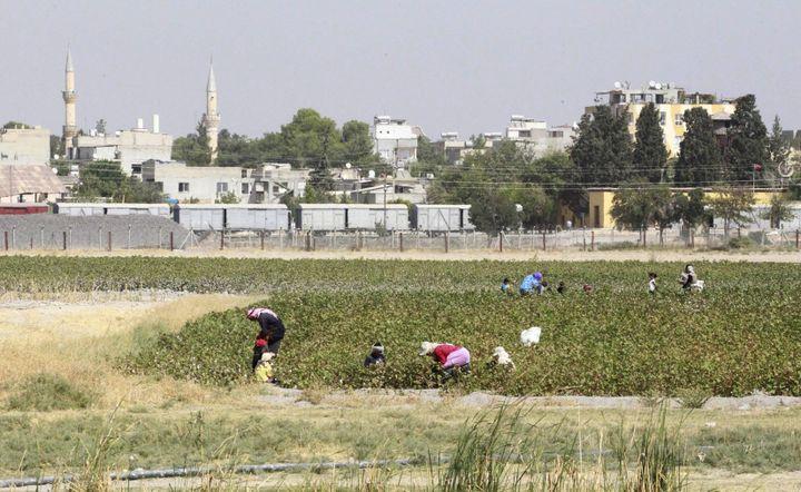 Des paysans dans un champ, près de la ville de Tel Abyad, à la frontière turco-syrienne, le 24 septembre 2014. (REUTERS)
