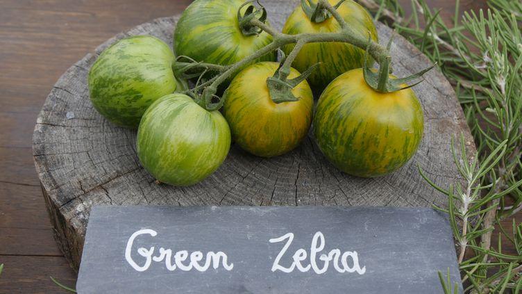 'Green Zebra', fameuse variété ancienne à chair bien juteuse et douce. Excellente en salade. (ISABELLE MORAND / RADIO FRANCE / FRANCE INFO)