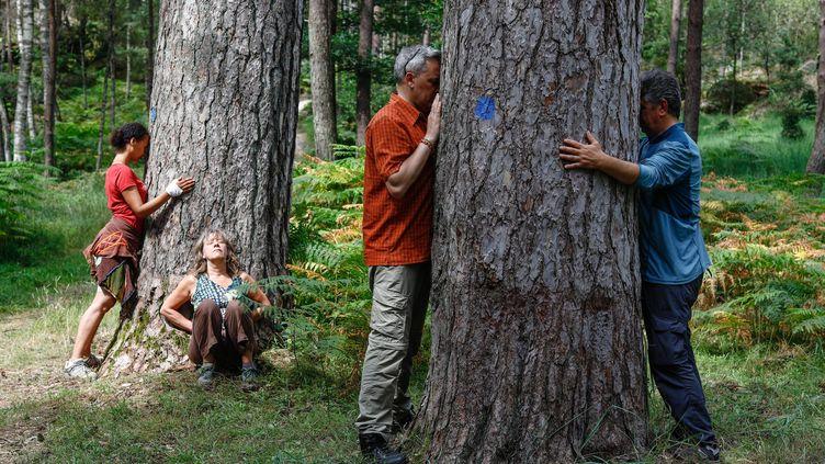 Un groupe d'une dizaine de personnes participeà un stage d'initiation de sylvothérapie en forêt de Fontainebleau, le 2 juillet 2018. (OLIVIER CORSAN / MAXPPP)