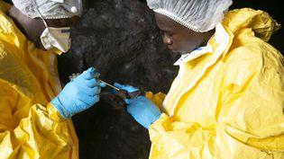 Des scientifiques gabonais du Centre interdisciplinaire médical de recherches de Franceville (CIRMF) prélèvent des échantillons sur une chauve-souris, le 25 novembre 2020, dans une grotte de la région de Zadie, au Gabon. (STEEVE JORDAN / AFP)