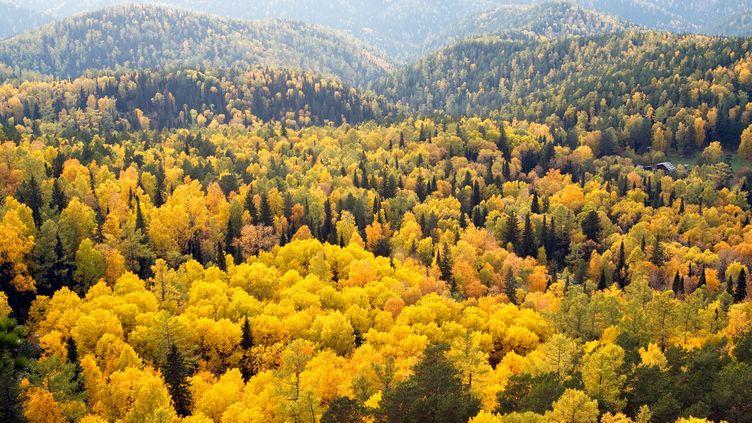 Les couleurs de l'automne transforment la taïga russe, dans cette photographie non datée. La Russie met en avant ses immenses forêts pour jouer sur son engagement sur la réduction des gaz à effet de serre, en vuede la COP21. (WU SWEE ONG / FLICKR RF / GETTY IMAGES)