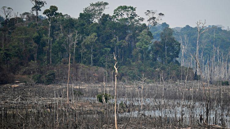 Un bout de la forêt amazonienne incendiée près de Porto Velho au Brésil, le 24 août 2019. (CARL DE SOUZA / AFP)