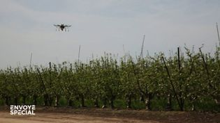 Des drones pollinisateurs pour remplacer les abeilles (ENVOYÉ SPÉCIAL  / FRANCE 2)