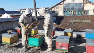Rémi et Nicolas, deux frères apiculteurs à Lagny-sur-Marne (Seine-et-Marne). (SEBASTIEN BAER / RADIO FRANCE)