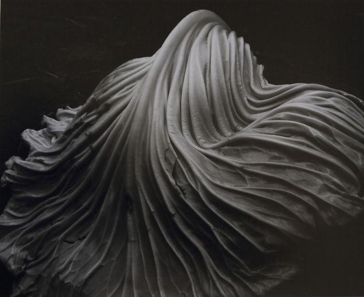 """""""Cabbage Leaf"""" d'Eward Weston. 1931  (Edward Weston)"""