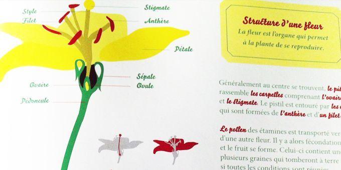 """L'herbier des Drôles de Petites Bêtes"""", page intérieure  (Antoon Krings / Gallimard Jeunesse / Giboulées)"""