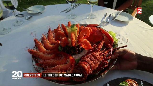 Madagascar : la crevette, l'or rose de l'île