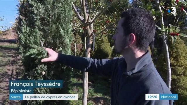 Santé : le pollen de cyprès est en avance