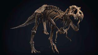 Stan, le squelette de T.Rex vieux de 67 millions d'années. (CHRISTIE'S)