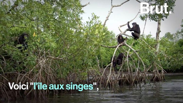 """VIDEO. Quelle est l'histoire qui se cache derrière """"l'île aux singes"""" ? (BRUT)"""