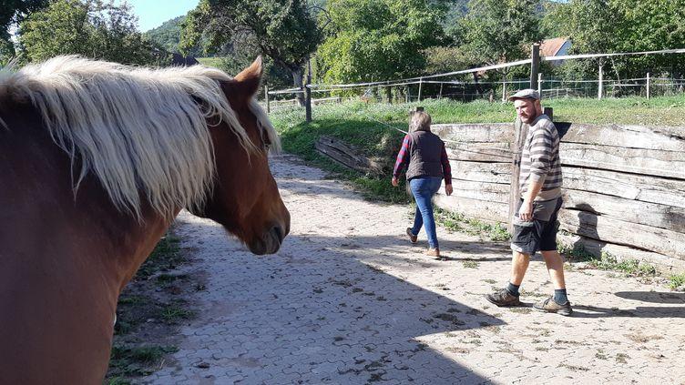 Le cheval de trait des Zusslin, Sésame, incommode les voisins avec son crottin et ses hennissements (photo du 19 septembre 2019). (PATRICK GENTHON / RADIO FRANCE)