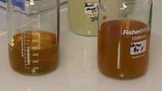 De l'urine humaine transformée en engrais naturel. (CAPTURE D'ÉCRAN FRANCE 3)
