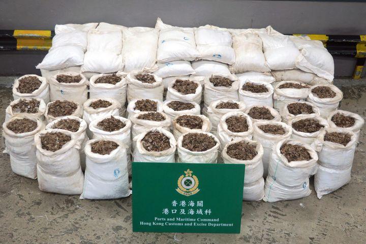 Une saisie de 1800 kg d'écailles de pangolins par les douanes à Hong Kong, pour une valeur estimée à 350 000 dollars, le 5 janvier 2018. (HONG KONG CUSTOMS AND EXCISE DEPARTMENT / AFP PHOTO)