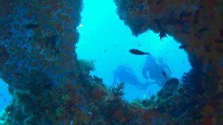 Tourisme : plongée dans les profondeurs du sud de la Corse (France 3)