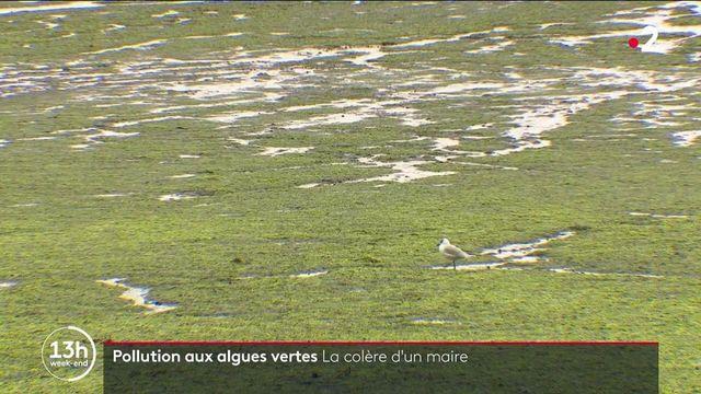 Cotes d'Armor : à Hillion, on lutte contre les algues polluantes